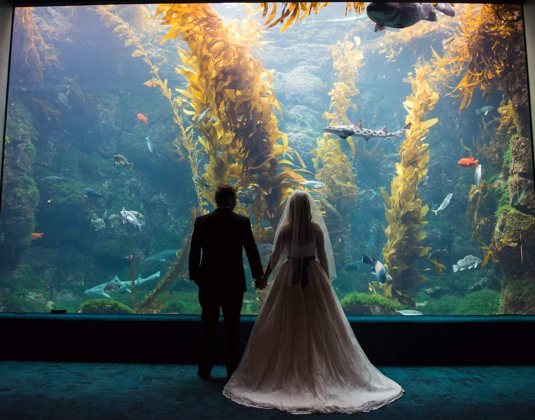 california aquarium wedding