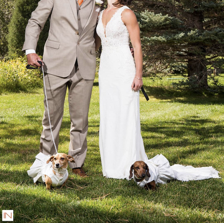 dachsunds at wedding
